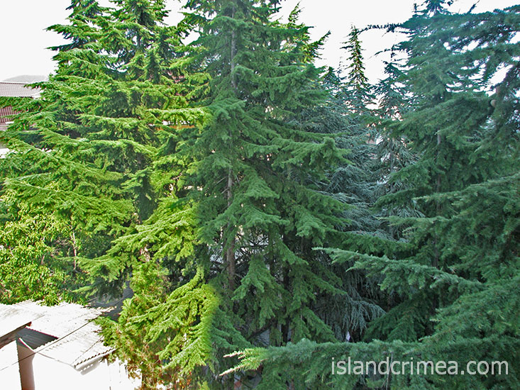 """База отдыха """"Мечта"""", корпус 2, вид на деревья."""